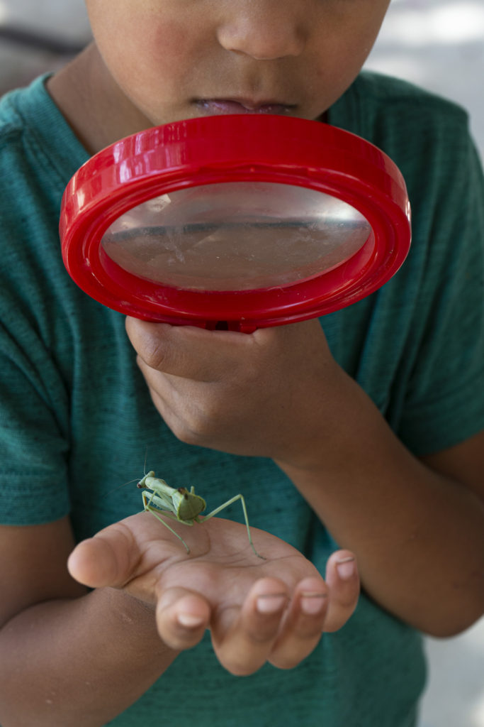 A photograph by the artist of a young child in a green shirt holding a praying mantis in one hand and looking through a red magnifying glass.